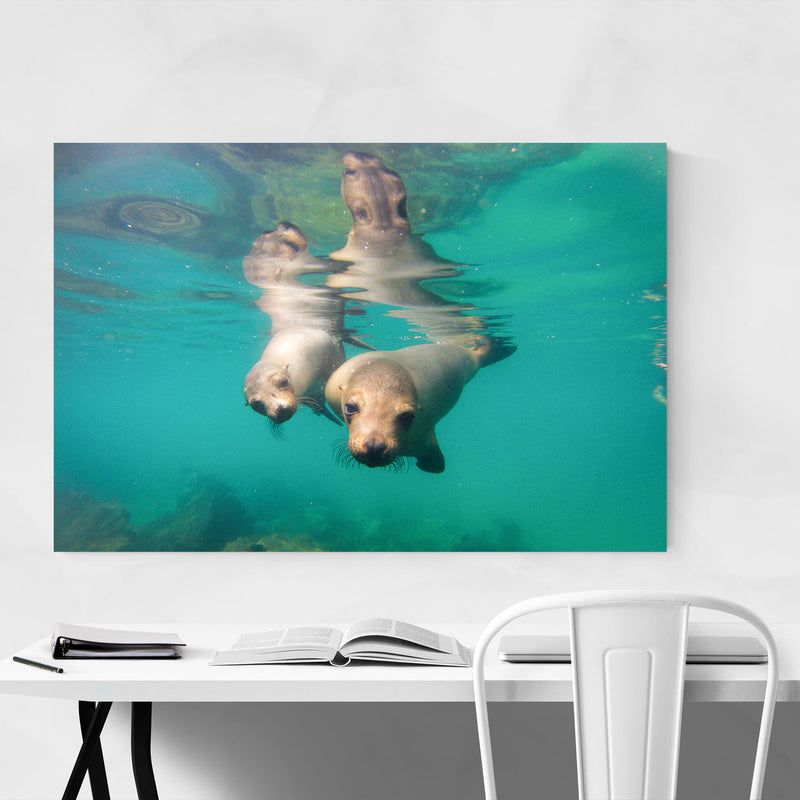 Sea Lions Wildlife Animal Canvas Art Print