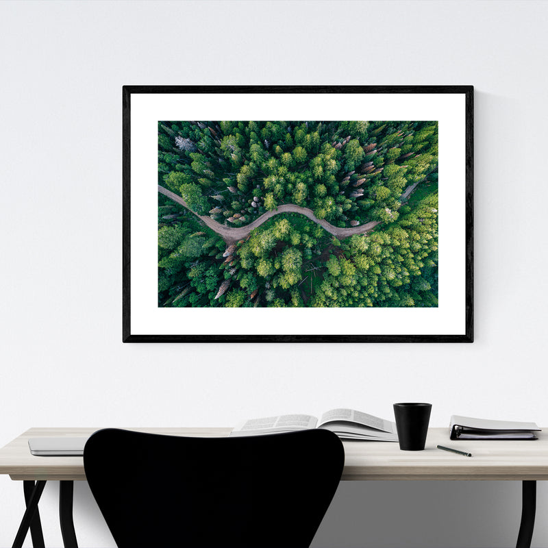 Forest Trees Nature Landscape Utah Framed Art Print