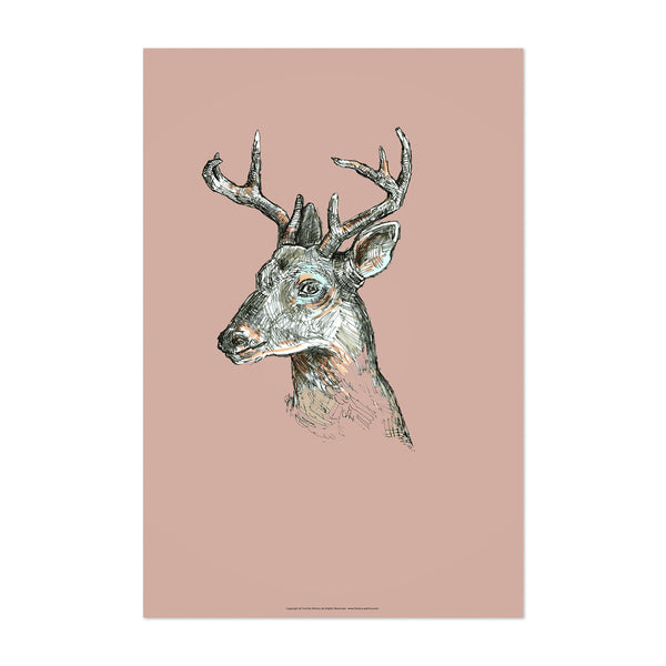 Deer Animal Illustration Nature Art Print