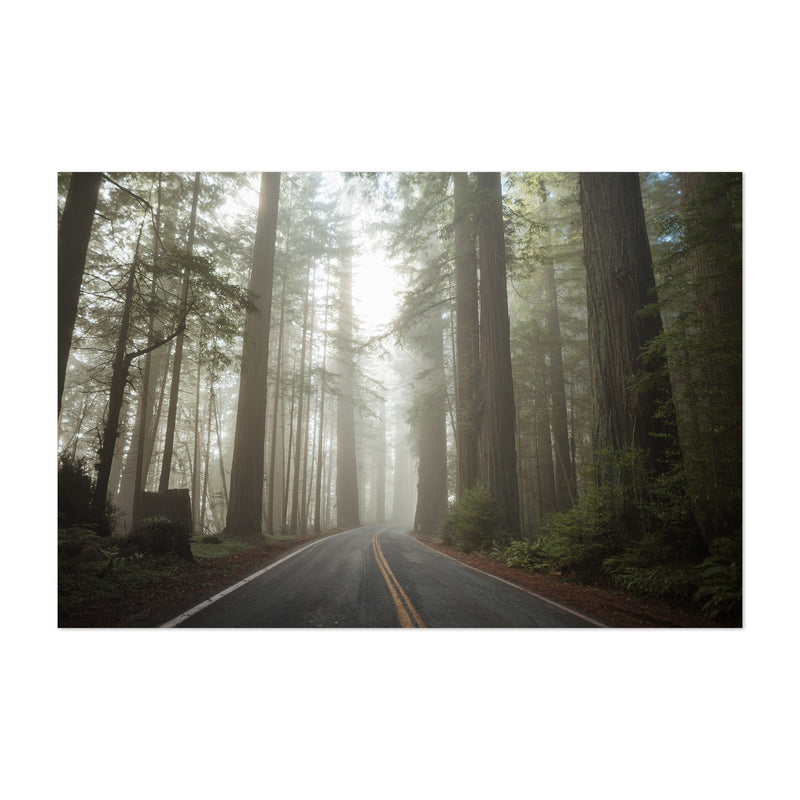 Redwood Forest Nature California Art Print