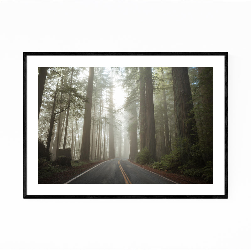 Redwood Forest Nature California Framed Art Print