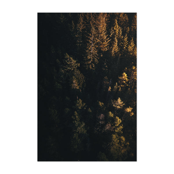 Haugesund Norway Forest Nature Art Print