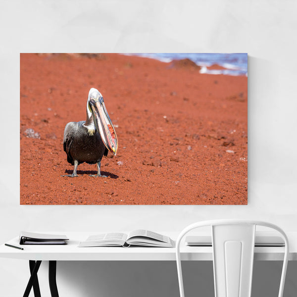 Galapagos Islands Pelican Animal Art Print