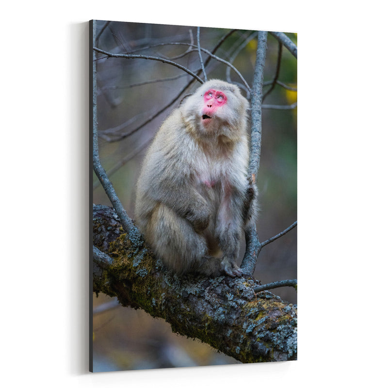 Japanese Macaque Monkey Wildlife Canvas Art Print
