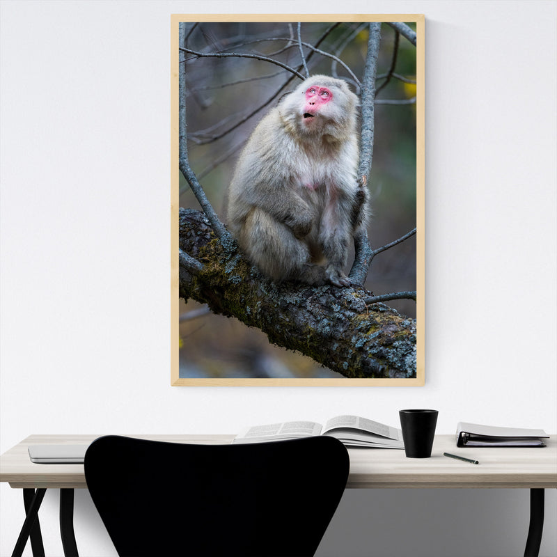 Japanese Macaque Monkey Wildlife Framed Art Print