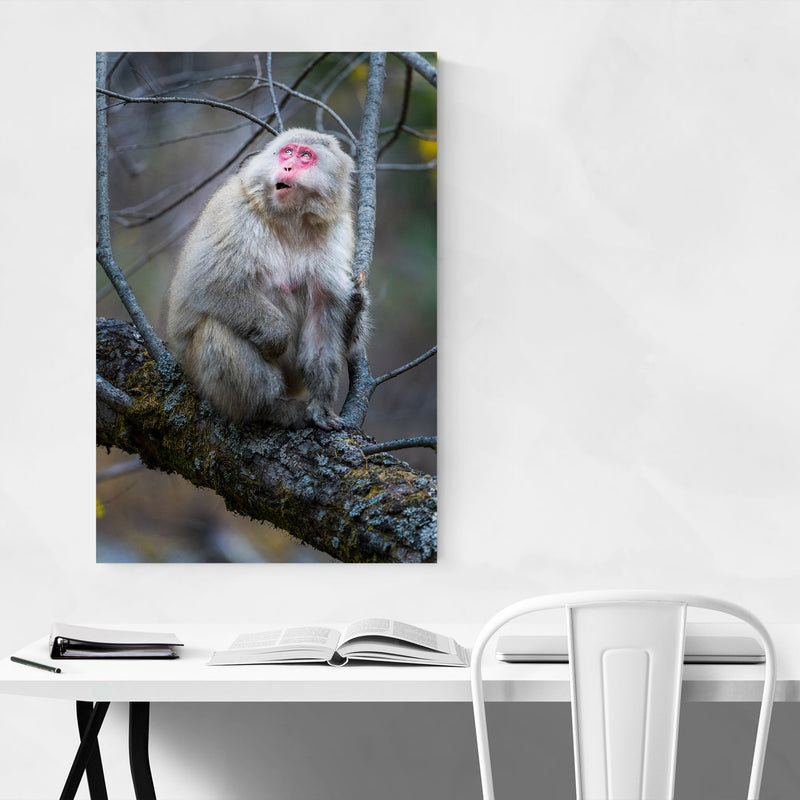 Japanese Macaque Monkey Wildlife Art Print