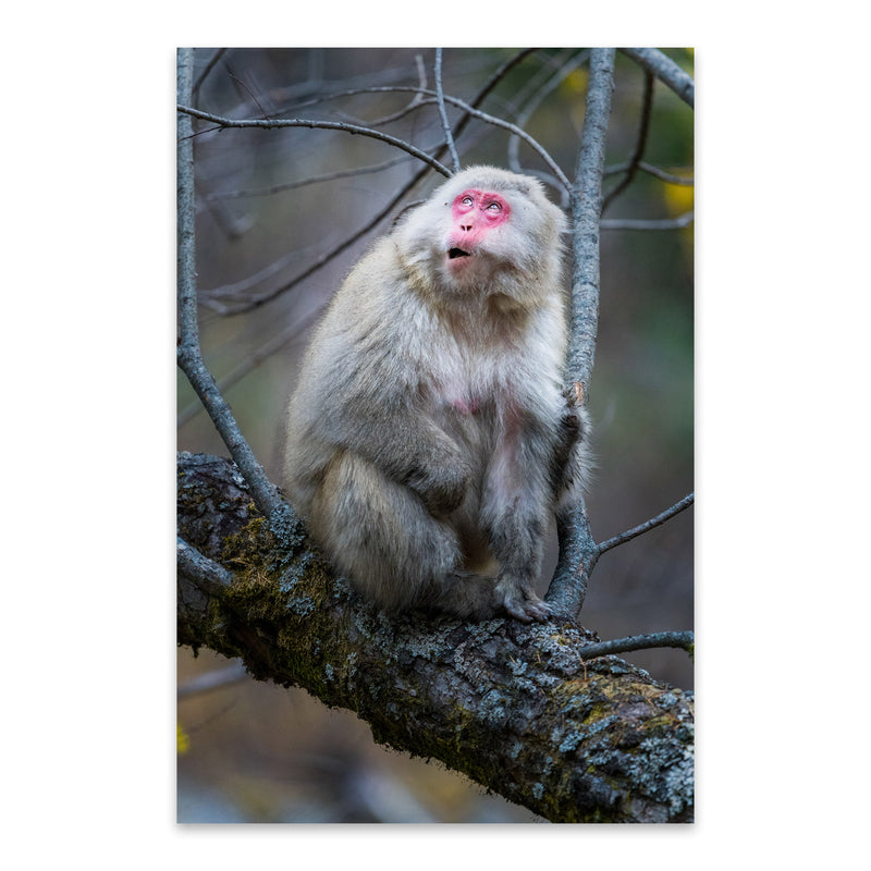 Japanese Macaque Monkey Wildlife Metal Art Print
