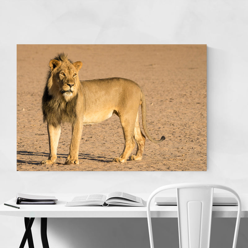 Lion Animal South Africa Nature Art Print