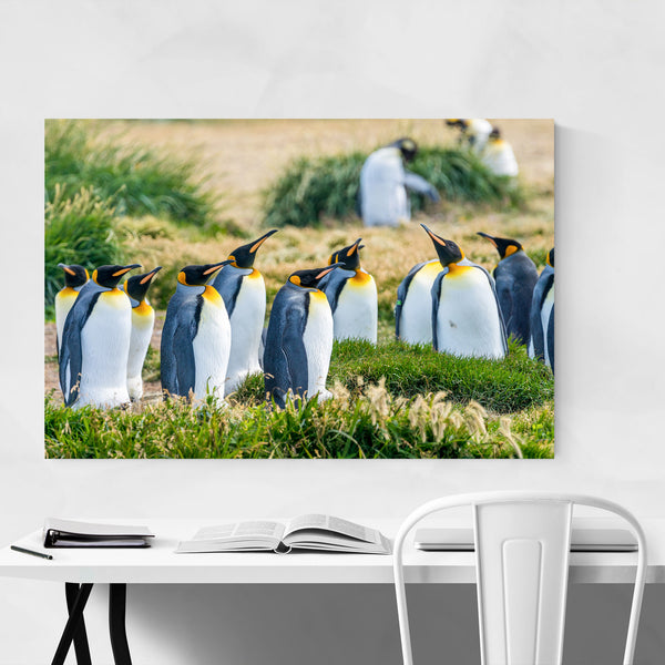Pengunins Animal Wildlife Chile Art Print