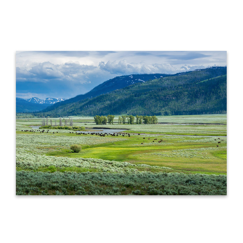 Yellowstone Lamar Valley Wyoming Metal Art Print