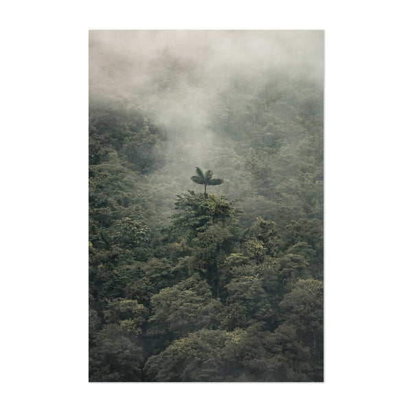 Palm Tree Foggy Forest Nature Art Print