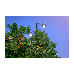 Orange Tree Marrakech Morocco Art Print