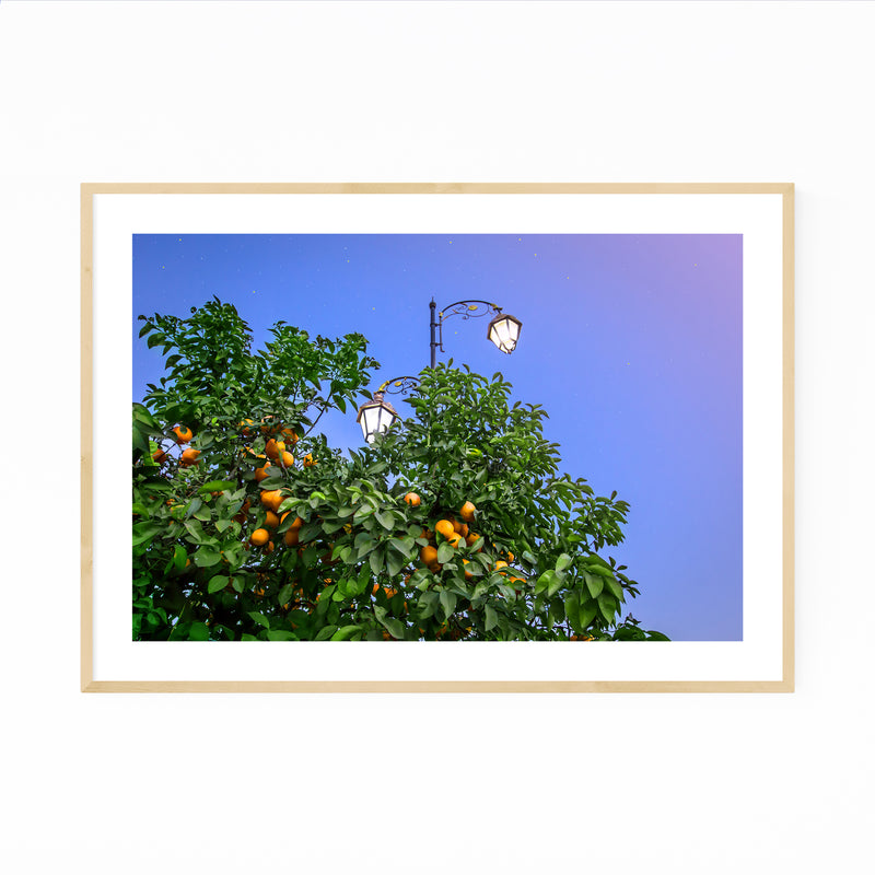 Orange Tree Marrakech Morocco Framed Art Print