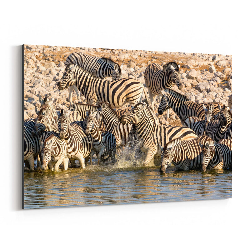 Namibia Africa Zebras Wildlife Canvas Art Print