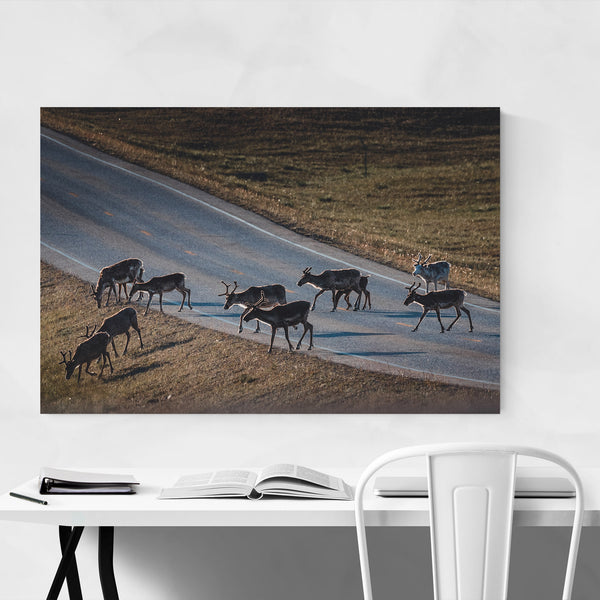 Raindeer Animal Wildlife Norway Art Print