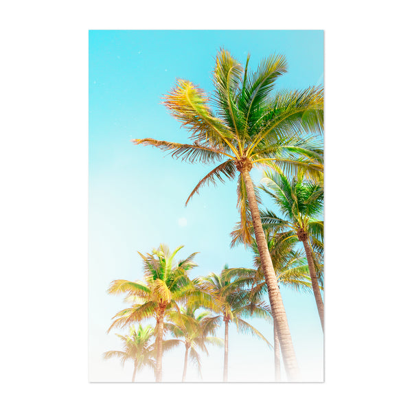 Miami Beach Florida Palm Tree Art Print