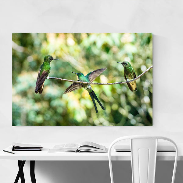Hummingbirds Wildlife Colombia Art Print