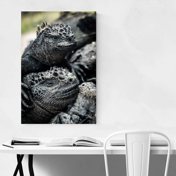 Galapagos Islands Iguanas Animal Art Print