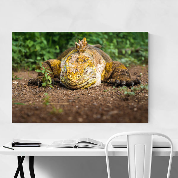 Iguana Animal Wildlife Ecuador Art Print
