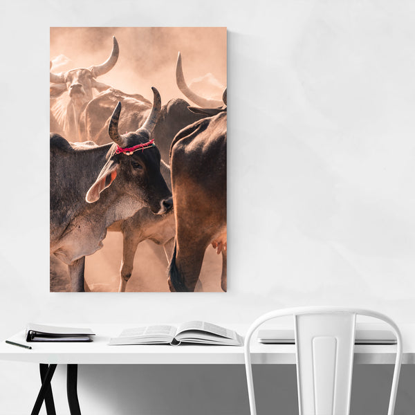 Cow Animal Photography India Art Print