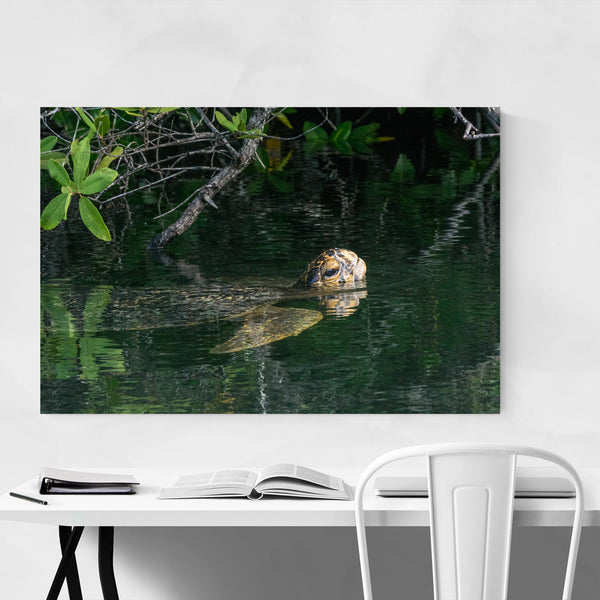 Sea Turtle Animal Wildlife Art Print