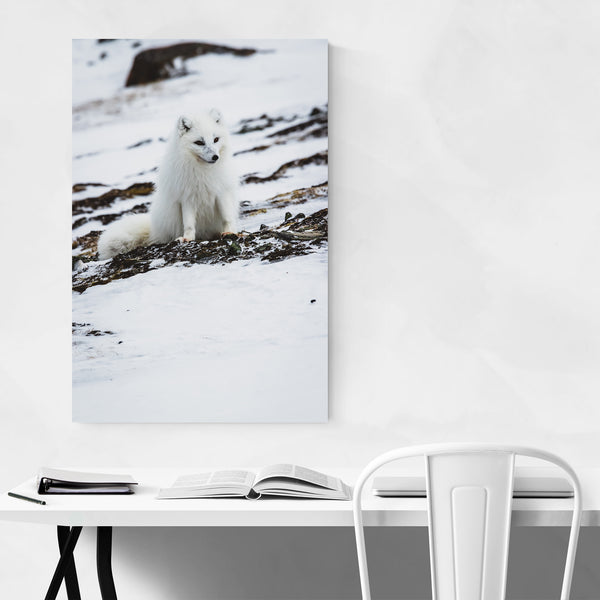 Svalbard Norway Nature Photography Art Print