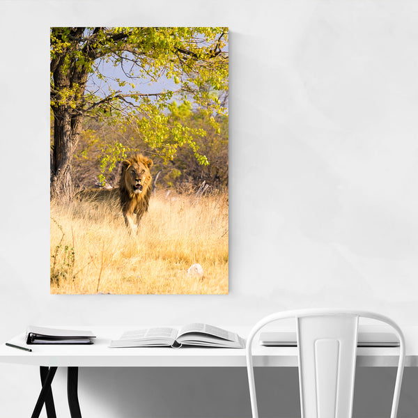Namibia Africa Lion Wildlife Art Print