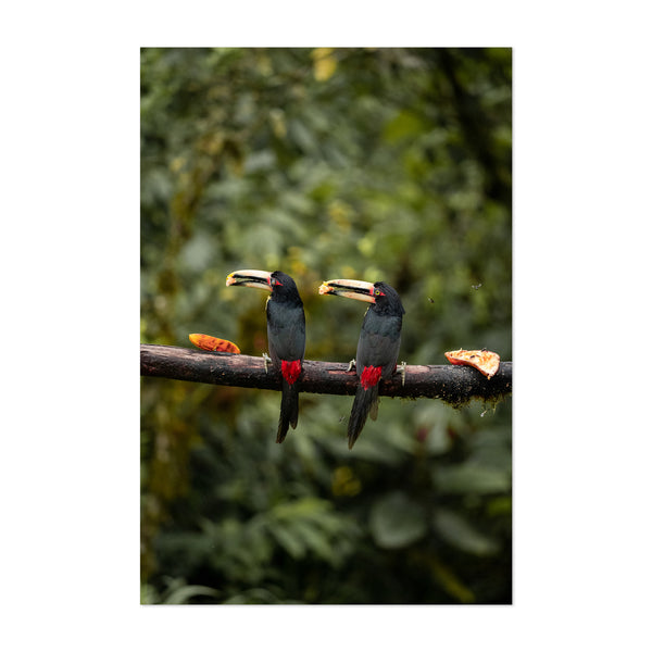 Toucan Bird Animal Photography Art Print