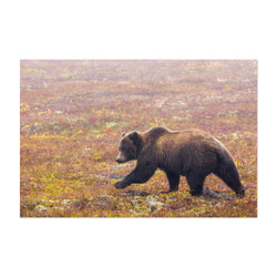 Grizzly Bear Animal Yukon Canada Art Print