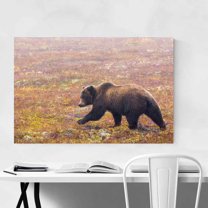 Grizzly Bear Animal Yukon Canada Canvas Art Print