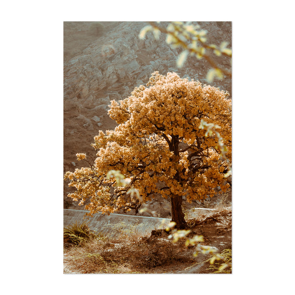 Yellow Tree Mountains Nature Scenic Art Print