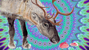 Psychedelic Drugs and the Flying Reindeer