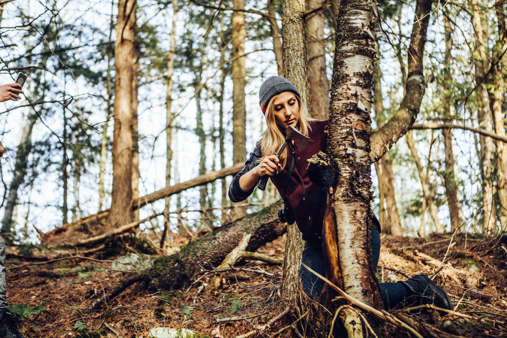 How to pick Chaga Mushroom in the wild