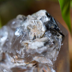 Macro photo of Muscovite and Biotite Mica crystals formed on tip of Large Quartz tower with green plant leaf in background