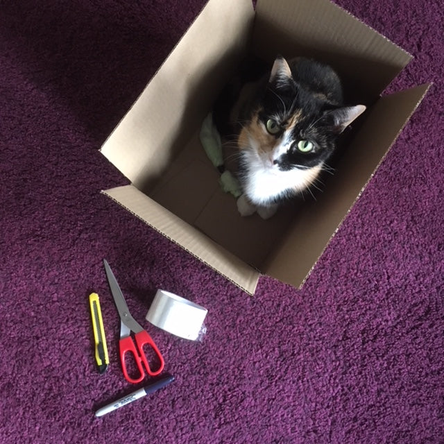 4 Uses for a Present Purrfections Box!