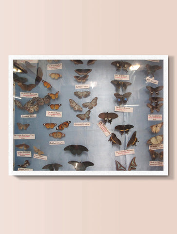 BUTTERFLIES I : WALL ART