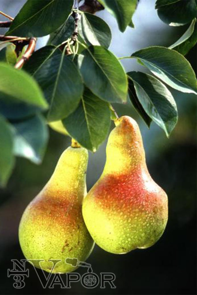 Just Pear