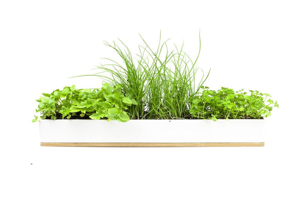 Windowsill Kit - Micro Herbs