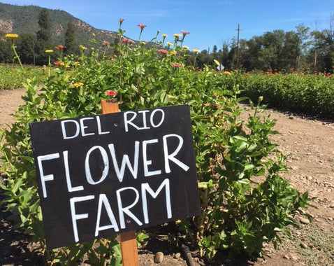 Flower it Forward - Trying out the free flowers @ Del Rio Vineyards
