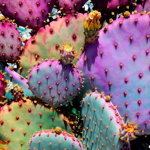 Rainbow Cactus Art Print by Justina Blakeney® - Jungalow
