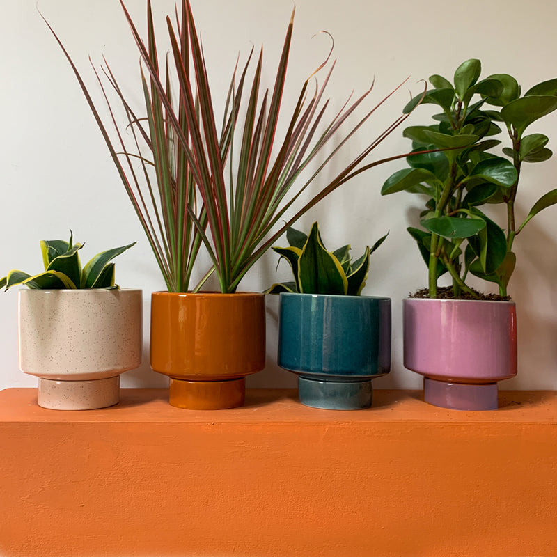 Assorted Kaya Shorty Ceramic Planter by Justina Blakeney®