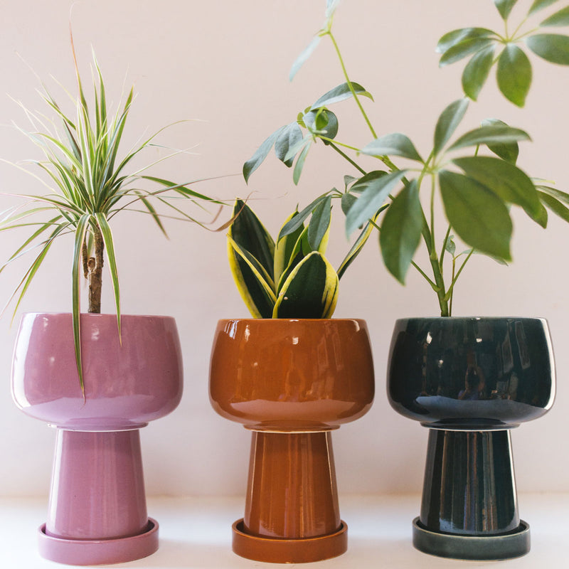 Kaya 3-Piece Ceramic Planter by Justina Blakeney®