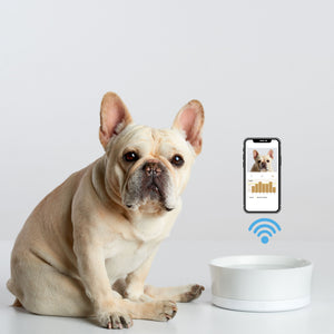 Obe Digital Dog wellness system probowl and app