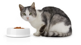 Petite Smart Bowl for Cats and Toy Dogs