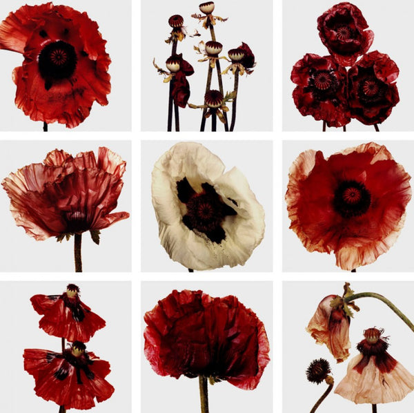 Poppies by photographer Irving Penn