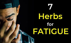 best herbs for fatigue