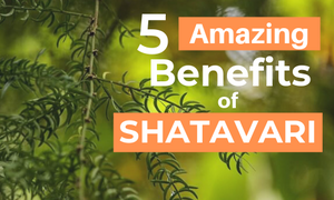 shatavari benefits