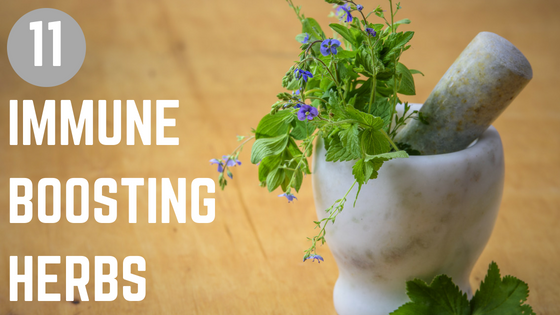 11 Immune Boosting Herbs to Keep Your Immune System Healthy