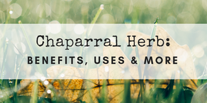 chaparral herb benefits and uses