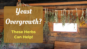 herbs for candida overgrowth